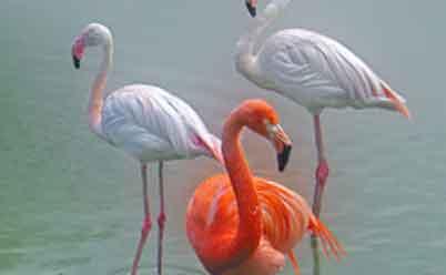 Розовый фламинго сделать своими руками