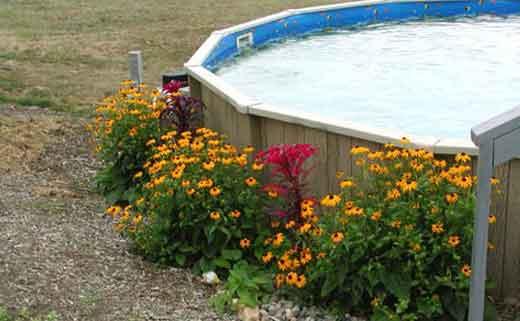 бассейн лягушатник