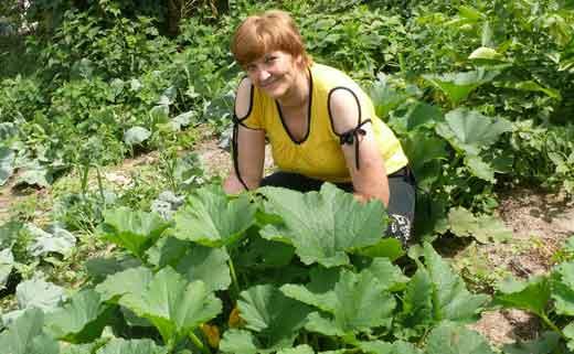 кабачки кусты на огороде