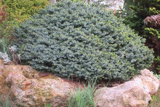 Растения на камнях горки