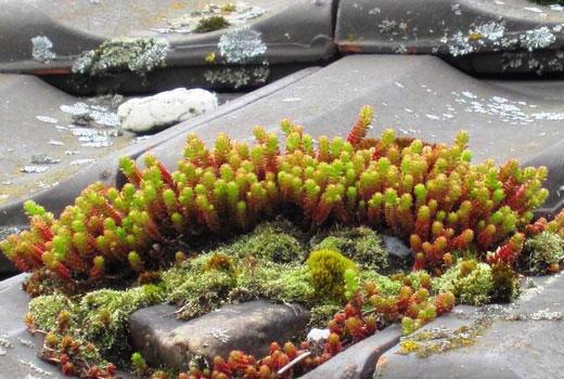 Интересные камни на альпийской горке