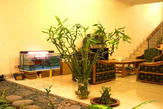 Растения фен шуй в прихожей