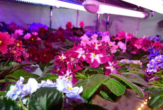 Люминосцентная подсветка для растений