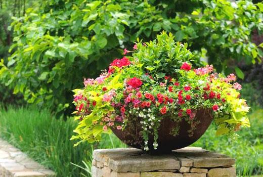 Чаша для цветов в саду