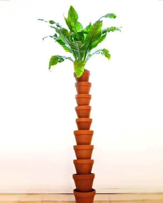 Пальма своими руками из горшков