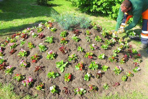 Высаживаем растения на клумбе горке