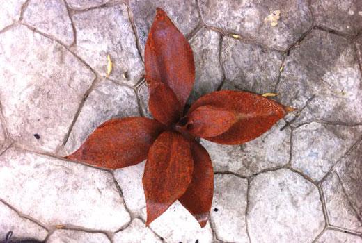 Растение из пластиковой бутылки