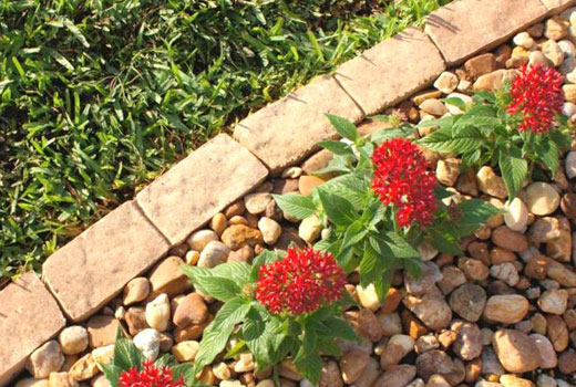 Бордюр для цветника в саду
