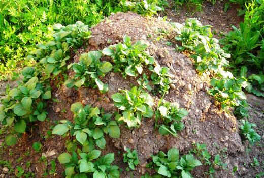 Пирамида для картофеля