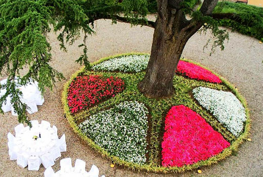 Клумба с четкой геометрией высадки цветов