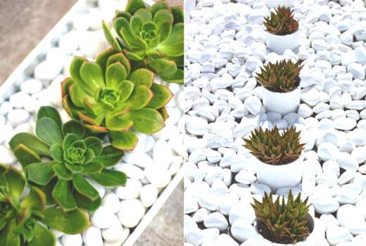 Садовые суккуленты на фоне декоративной гальки