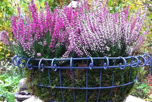 Чаша из прочной сетки для высадки цветов