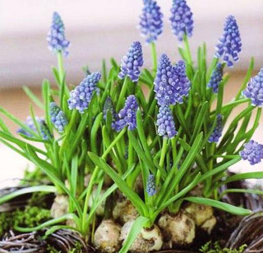 Нарядные весенние цветы