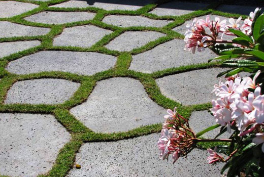Газонная трава в швах между плитами дорожки
