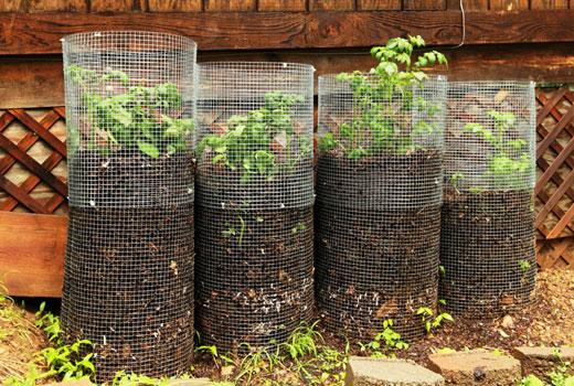 Картофель выращивает в сетке