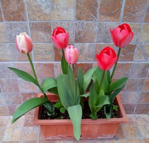Пластиковый контейнер для цветов
