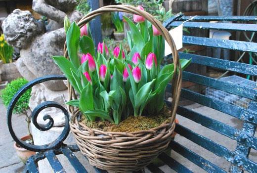 Корзинка для тюльпанов