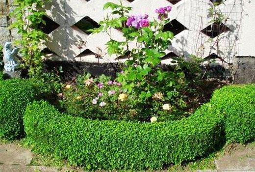 Заборчик из растений