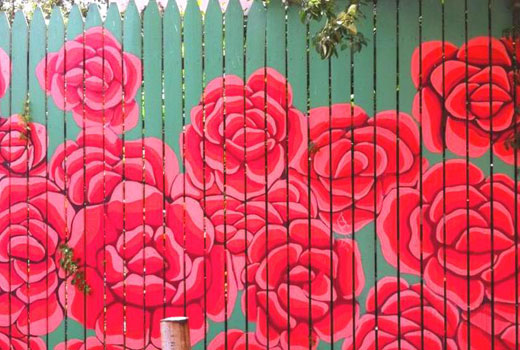Розы на деревянном заборе