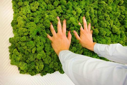Зеленая стена из мхов