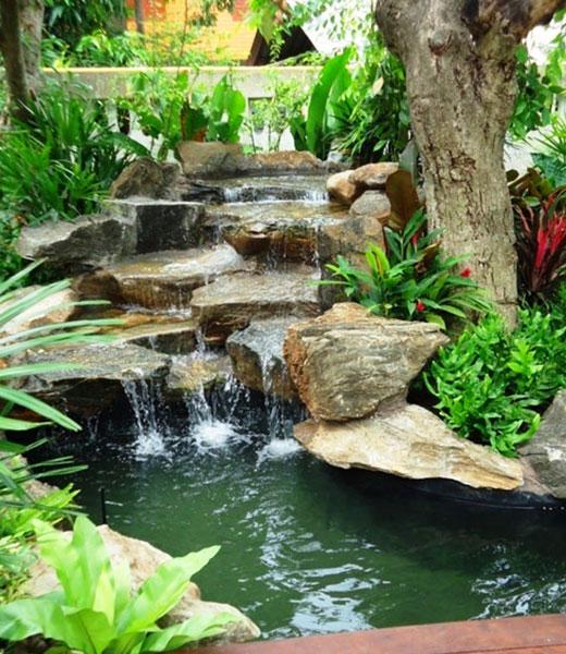 Тенелюбивые растения возле водопада