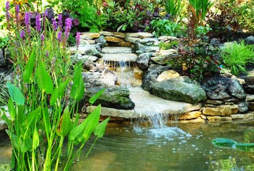 Влаголюбивые растения для водопада