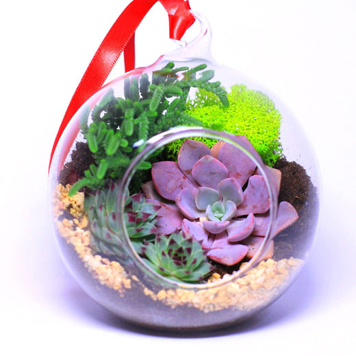 Красивый флорариум с растениями