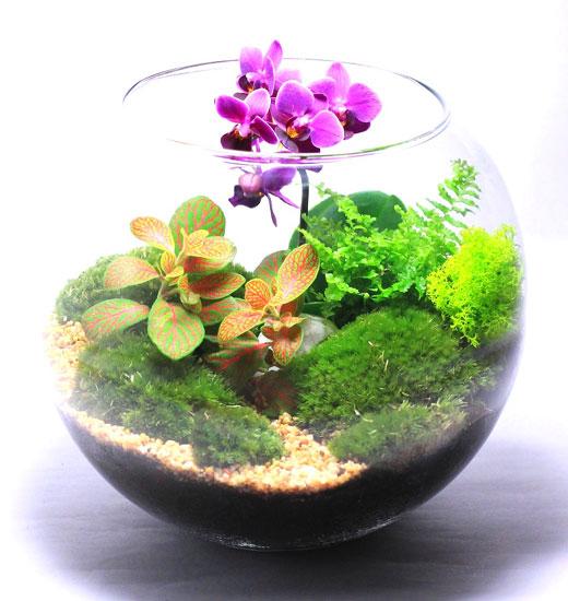 Флорариум цветущий