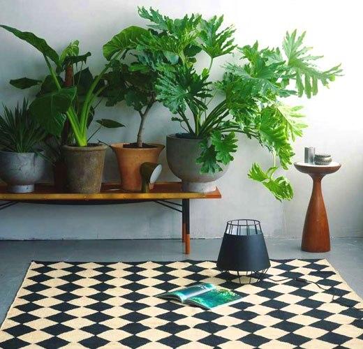 Неприхортливые комнатные растения