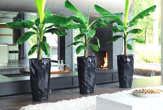 Крупные растения для зонирования комнаты