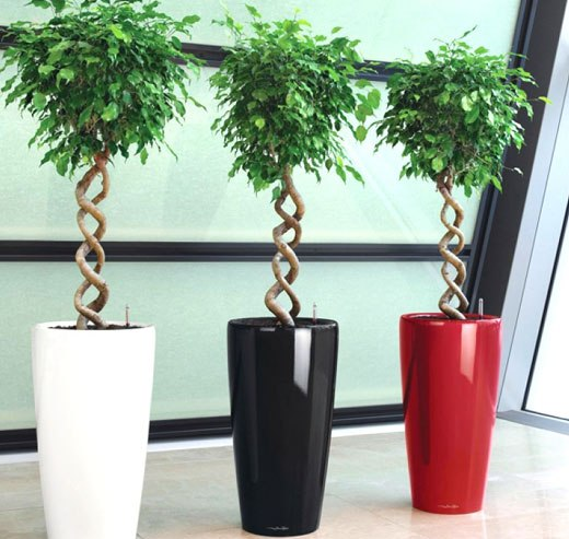 Крупные растения для дома