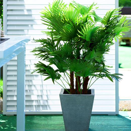 Пальма комнатная в интерьере