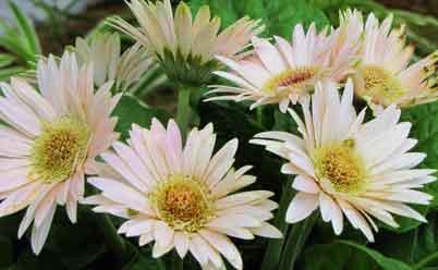 растения для очищения