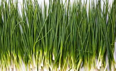 лук зеленый выращивание