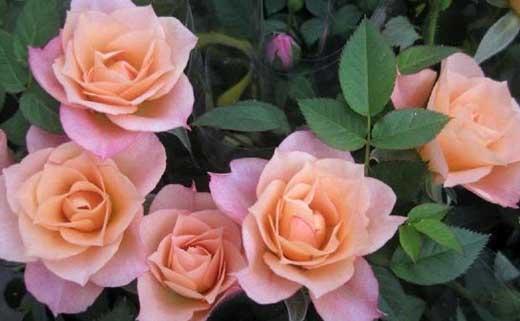 энергетика цветов