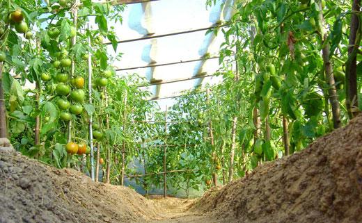 подкормка овощей