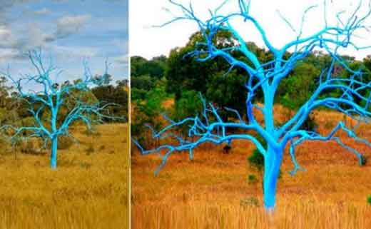 Декоративное дерево в саду