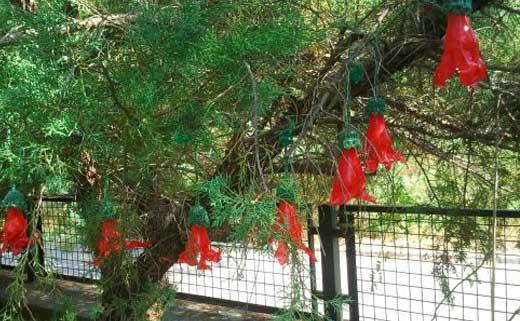 лиана из пластиковых цветов