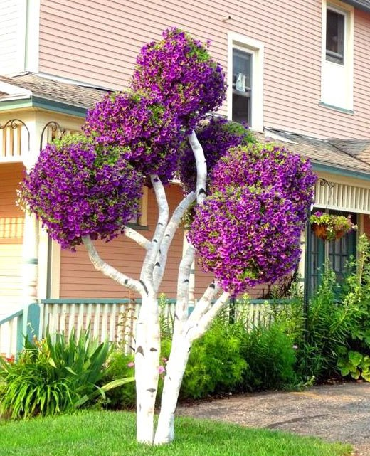 береза дерево