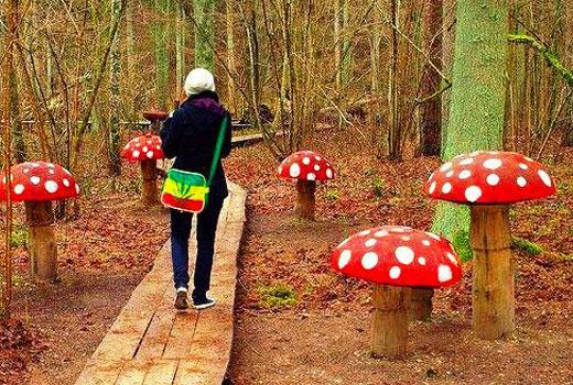 грибы на участке декоративные