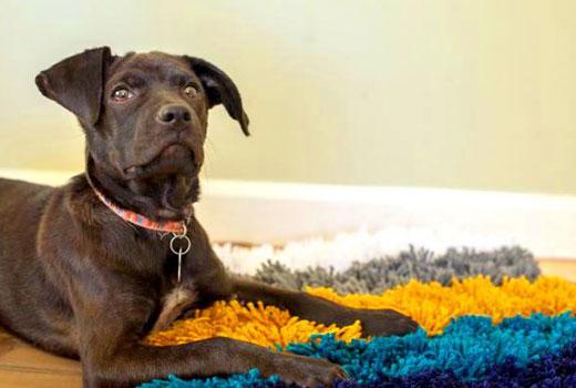 готовый коврик для собаки