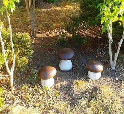 гриб в саду