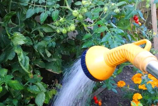 опрыскивание грядок на огороде
