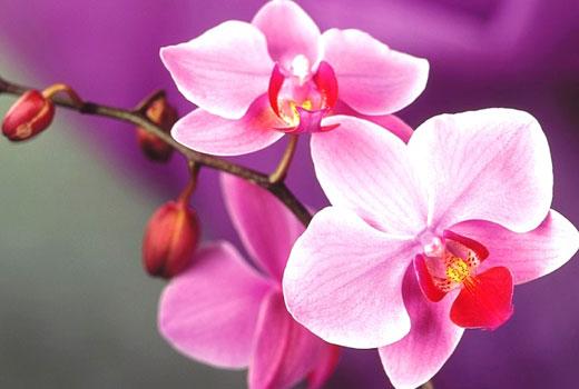 орхидеи_3