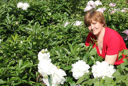 крупные цветки пионов
