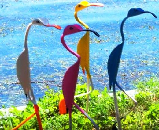 птицы в танце