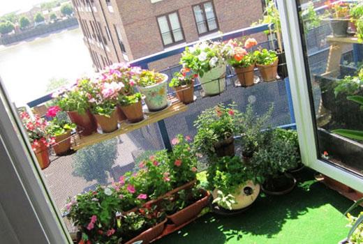 растения для восточного балкона