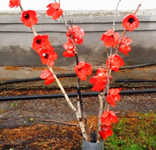 красные цветы из пластиковых бутылок