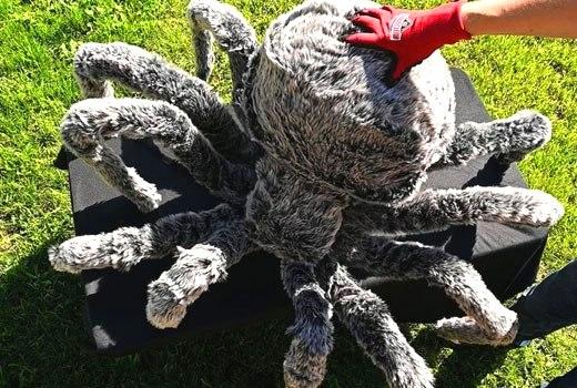 Декор Хэллоуин паук