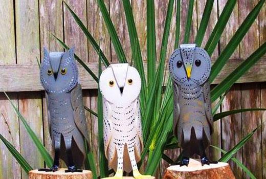 три совы